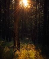 Fairy tree by MoonKey19