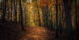 In The Woods XVII