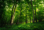 In The Woods XVIII