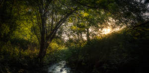 Peaceful wilderness by MoonKey19