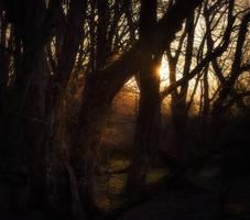 Last Light by MoonKey19