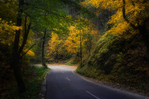 Autumn on the road by MoonKey19