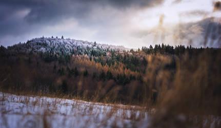 Remembering winter