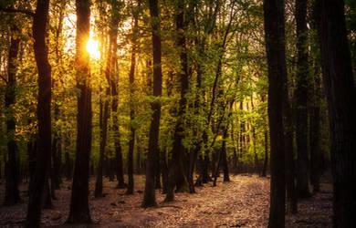 In The Woods XXVIII