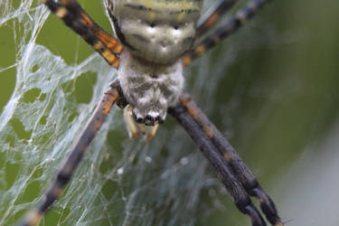 A Spider's Network by PhotoF0X