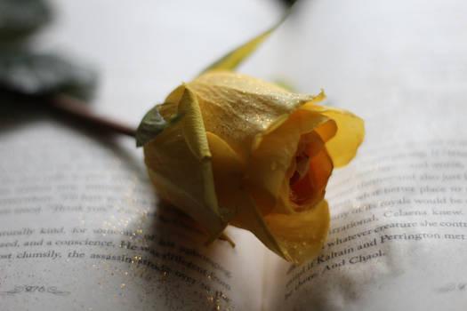 reading rose