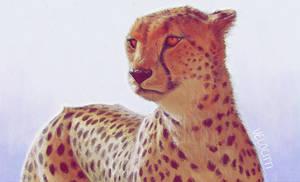 Cheetah by velocitti