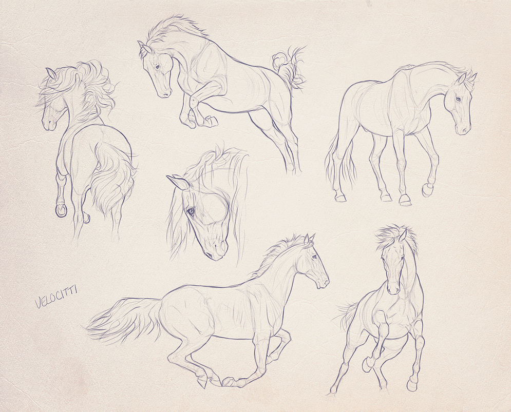 Equine Sketches by velocitti