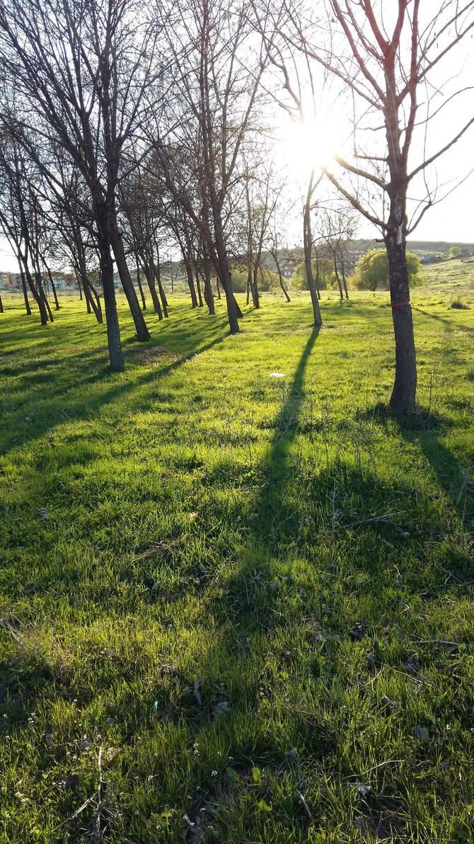 Trees' shadows