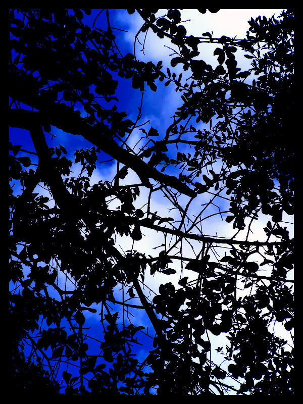 Sky Silhouette by hucast