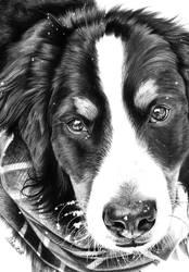 BAKS, a cute dog, Rest in Peace by Mim78