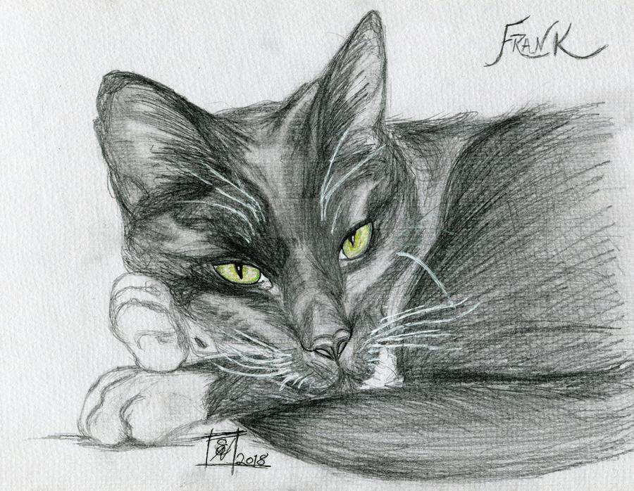 Frank (winner of my Valentine's Day draw) by DreamingofDarkhorses