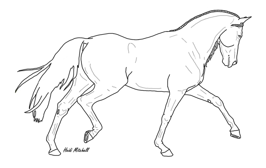 Dressage Horse Trot 2 by ThreeHoundsGraphics on DeviantArt