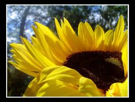 Sunflower by Seh-Rah-Bee