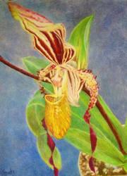 Paph Michael Koopowitz Slipper Orchid by EarthsWhisper