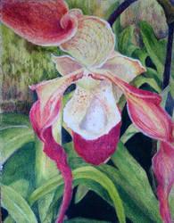 Phrag Bouley Bay Slipper Orchid by EarthsWhisper