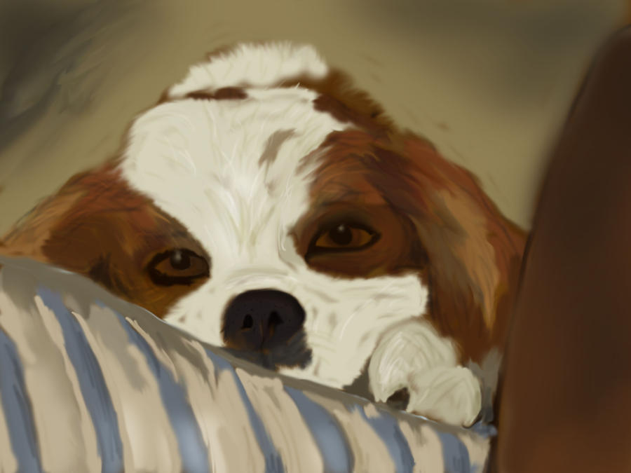 king charles spaniel by alana-101