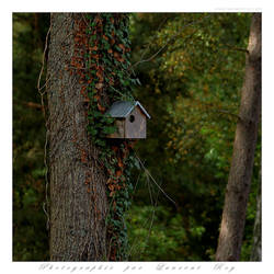 Cute bird house by laurentroy