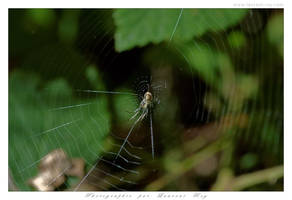 Spider - 007 by laurentroy