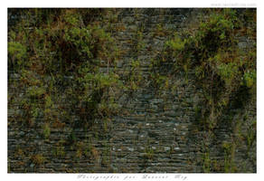 The wall by laurentroy
