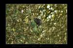 Feedind the birds 01 by laurentroy
