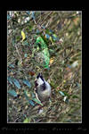 Feedind the birds 03 by laurentroy