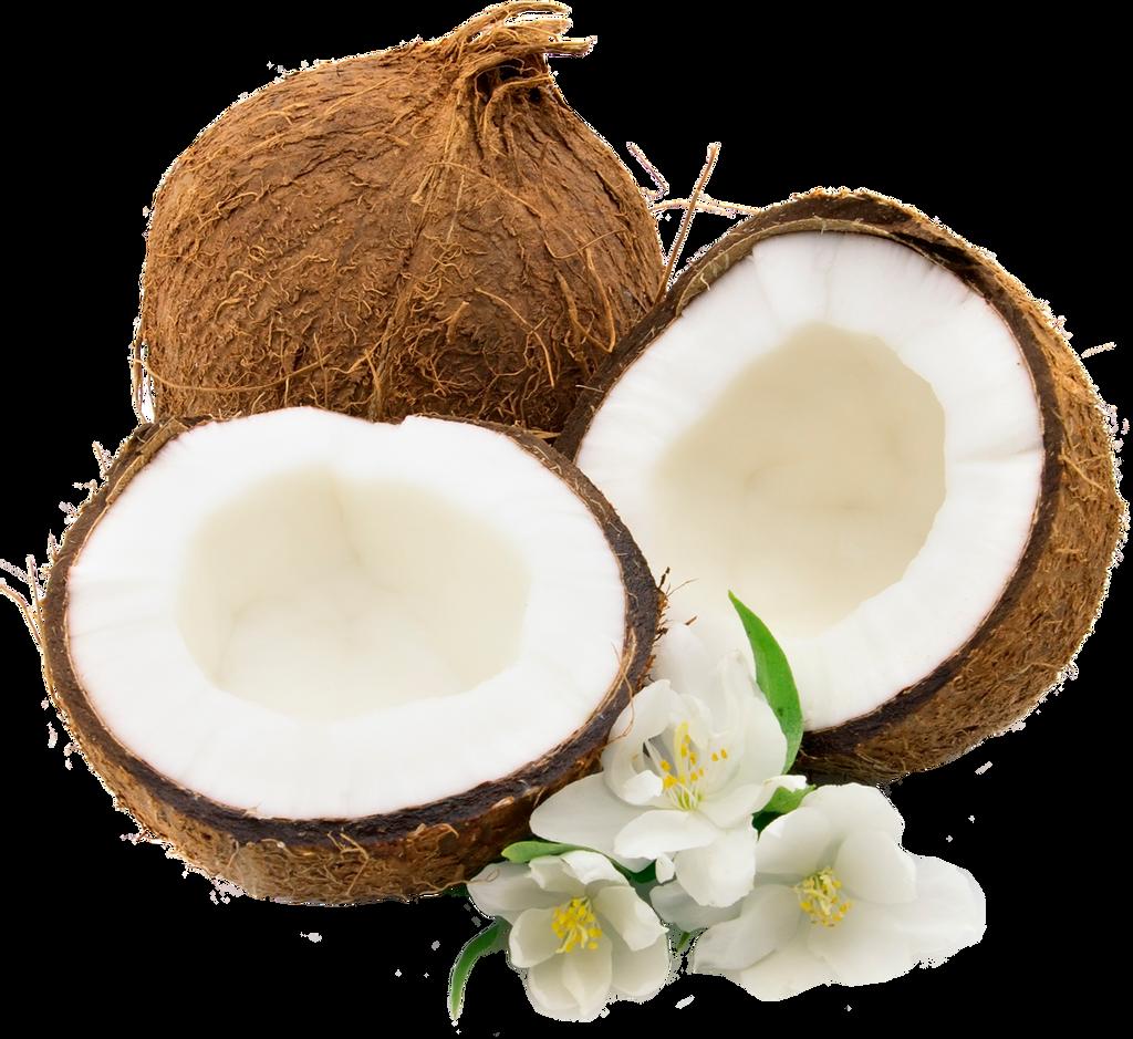 coconut 1 by lenkinrom on deviantart coconut clip art images coconut clip art images  black  white