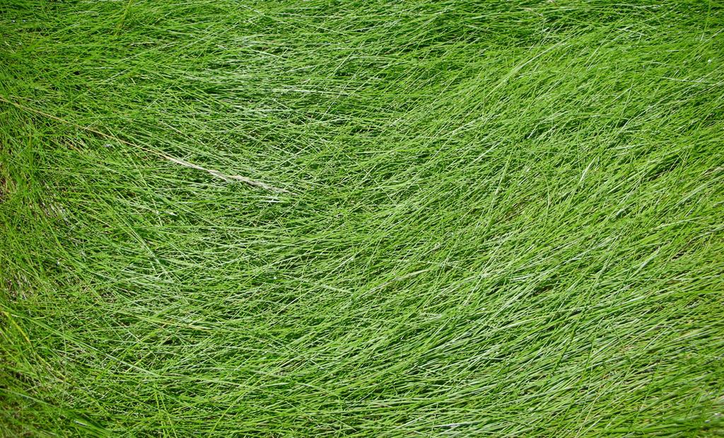 tall grass texture seamless. Contemporary Tall Grass Texture By Jshei  Intended Tall Seamless U