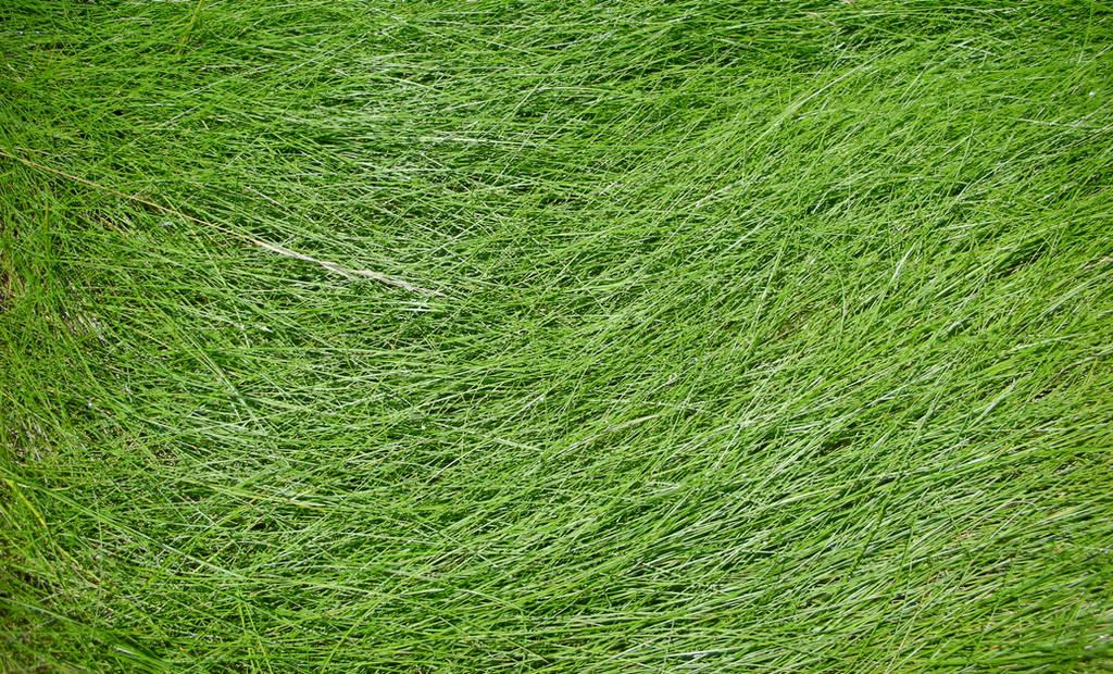Grass Texture by Jshei