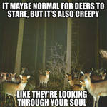 Deer Stare by AUBREY1144