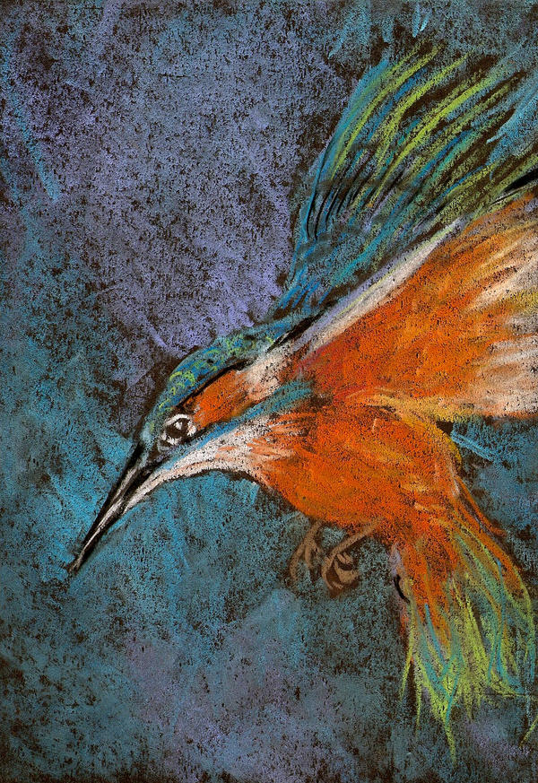 Colibri con tiza pastel by lucanroll