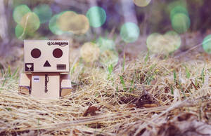 Danbo I. by TynahC