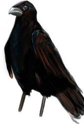 A Crow For A Nemesis