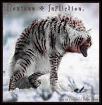 2004: Noxious Infliction