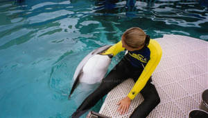 Dolphin vore 01