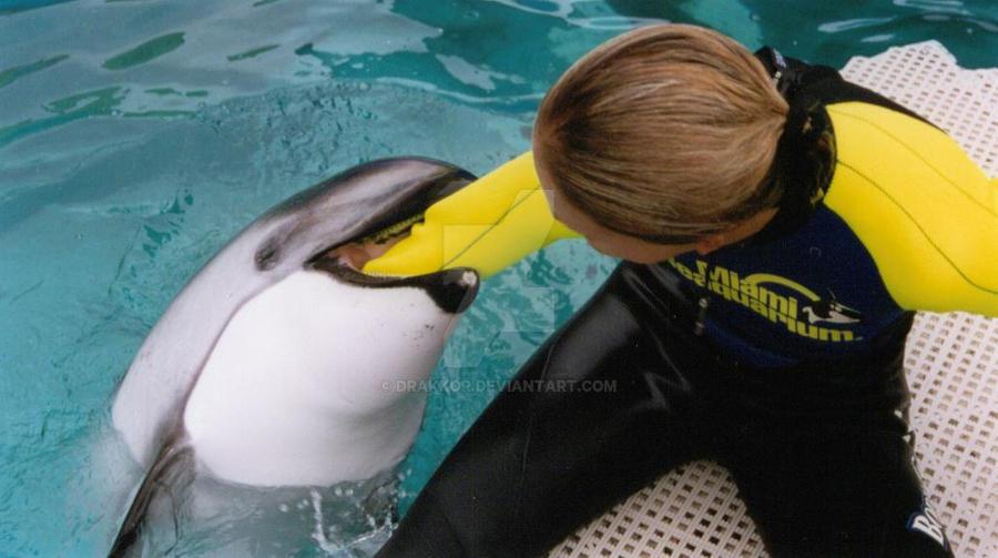 Dolphin vore 02 by drakkor