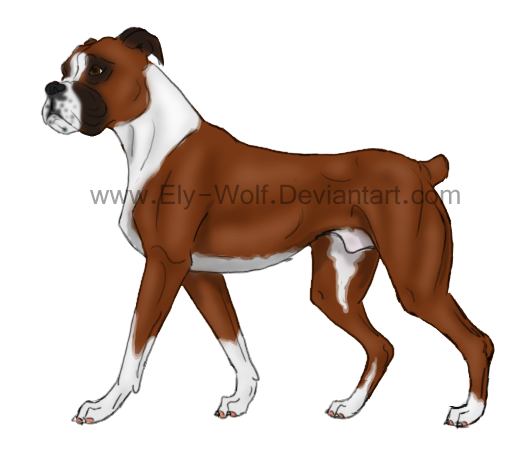 Boxer Dog Drawing Easy