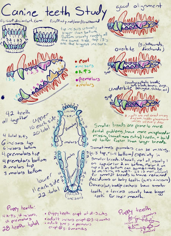 Canine teeth study by Feralhound07 on DeviantArt