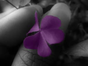 Purple Love .. to spread..