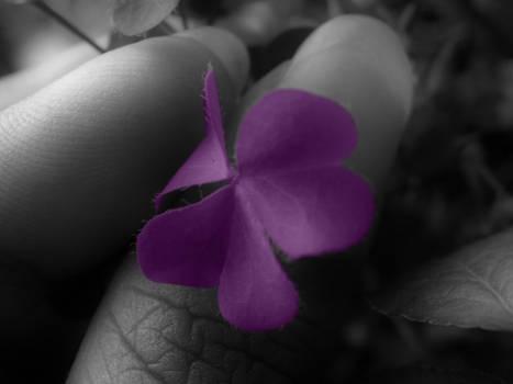 Purple Love .. to spread ..