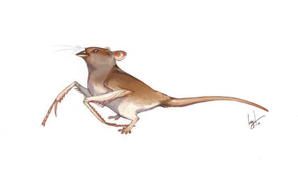 Mantis Sparrowmouse by hellcorpceo