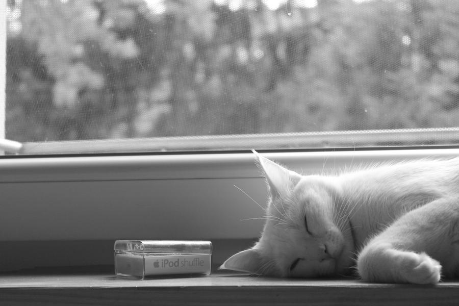Cat 3 by jurca315