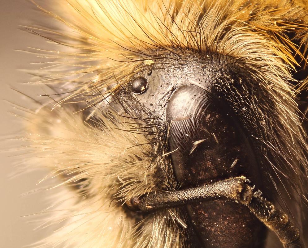 Bug by jurca315