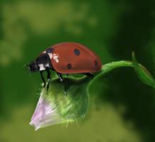 Coccinella Septempunctata by 11-73-3-33