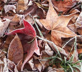 Frosty Leaves by laracoa