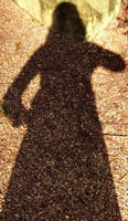 Silhouette by laracoa