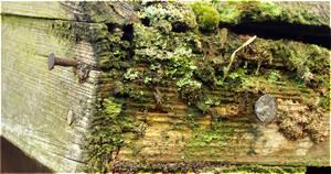 Ancient by laracoa