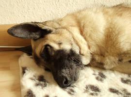 Sleepy head Nuka by laracoa
