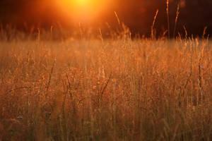 Sunny Field by laracoa