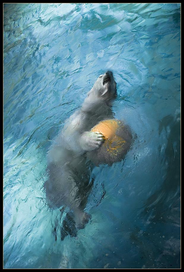 Polar Bear by dpbBryan